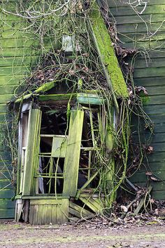Lost | Forgotten | Abandoned | Displaced | Decayed | Neglected | Discarded | Disrepair |  Mossy old windows abandoned