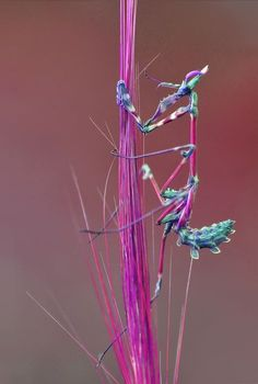 "Very colorful ""Mantis"""