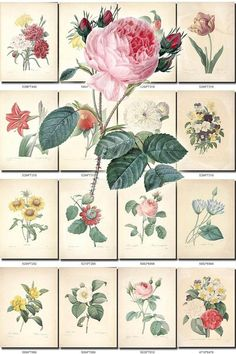 FLOWERS-106 Collection of 297 vintage images paper decoration beautiful florist botanical picture High resolution digital download printable           data-share-from=listing        >           <span class=etsy-icon