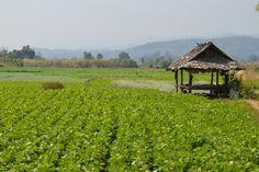 """Mae Sariang, Thailand - Stunning"""""""