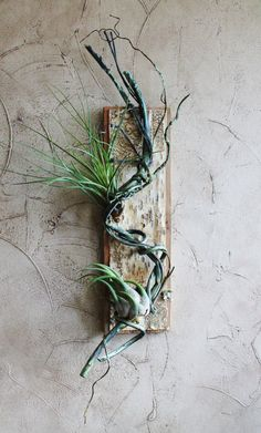 Twisted Vine Air Plant Holder Not including air by BarnwoodBlooms, $33.00