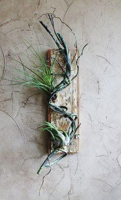 Torsadée vigne plante aérienne titulaire sans par BarnwoodBlooms