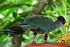 Can you name this bird? This bird can be seen in African Aviary exhibit.