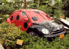 """Beetle mania A recycled Volkswagen Beetle is the main attraction in the Reiman Gardens conservatory. The """"Ladybug Breakfast"""" educational display opened in June and runs through November. My Dream Car, Dream Cars, Jorge Martinez, Hot Rods, Bug Car, Beetle Car, Vw Cars, Cute Cars, Car Shop"""