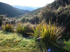 Stunning Sun!!! Great Walks, South Island, North West, Wilderness, Fields, Coastal, National Parks, Track, Sun