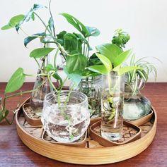 water propagation means more plants, houseplants, easy houseplants, plant blog, cocktail blog