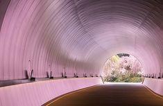ミホミュージアム 桜トンネル ~壁など反射物を効果的に使ったリフレクション撮影~