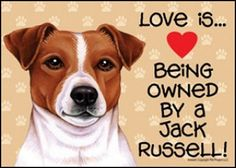 Love is.....jack russell
