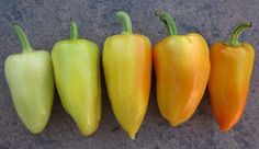 Antohi Romanian Pepper - 20 Seeds - Heirloom