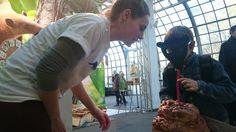 """Unterstütze """"Ameisenbär sucht Frau"""": https://www.betterplace.org/de/projects/36425-ameisenbar-sucht-frau-werde-zum-wingman  Hilf dem kleinen Ameisenbären Costa Ricas bei der Partnerfindung und unterstütze unser  Wiederbewaldungsprojekt """"Ameisenbär sucht Frau"""" zum Schutz und Erhalt des kleinen Ameisenbären     #Regenwald #Rainforest #Tamandua #Ameisenbär #Anteater #AmeisenbärSuchtFrau #CostaRica #Naturschutz #Conservation #TropicaVerde #MonteAlto"""