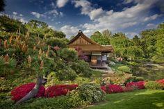 La Beauté Exotique Du Jardin Japonais