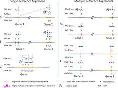 A flexible Bayesian method for detecting allelic imbalance in RNA-seq data | RNA-Seq Blog
