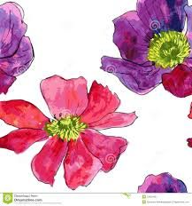 Resultado de imagen para anemona flor dibujo