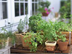 土なしプチ菜園!キッチンで楽しむ野菜の水耕栽培 [ガーデニング・園芸] All About