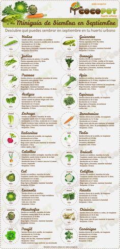 +Miniguía de Siembra de semillas en septiembre para Huertos..