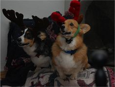 images cute christmas animals - Google Search
