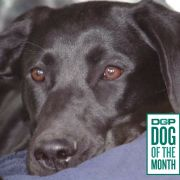 Steel: DGP's December Dog of the Month