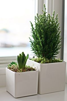 simple green and white christmas decor #flora #plants