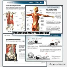 Anatomy illustrations help you visualize and understand the way the core muscles are supposed to work.   This will accelerate your learning curve toward correct exercise technique.  Your learning will be reinforced by illustrations throughout the book comparing good and poor form.