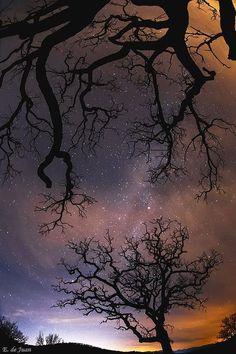 Tree and Stars, Elviria, Marbella, Malaga, Spain
