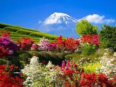 Hitachi Seaside Park and Mount Fuji