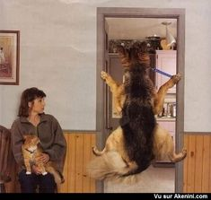 Quand un chien refuse d'aller chez le vétérinaire - When a dog refuses to go to the vet