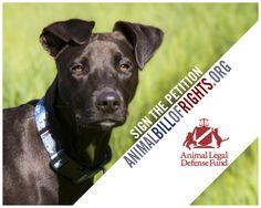 Signer le projet de loi des droits des animaux!