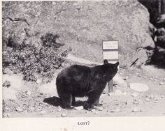 Bears can breed, but not read.  This is only common sense.