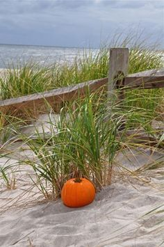 Fall on Hilton Head Island
