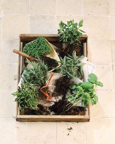 8 hierbas para que tu jardín culinario crezca