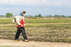 TANJUNG KARANG, MALAYSIA - 31 JANUARY 2016 : Unidentified farmer spraying insecticide with... by Mawardi Bahar on 500px
