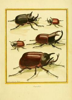 t.1 - Planches enluminées d'histoire naturelle / - Biodiversity Heritage Library