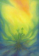 la Métamorphose de la Plante Avril
