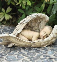 Sleeping Baby In Wings