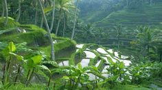 EXOTIC BALI IN PICTURES