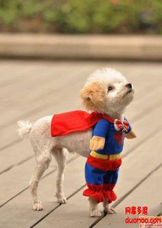 Super Dog makes me happy :D