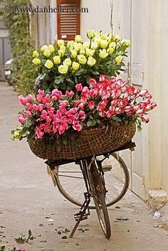 Hà Nội, Vietnam flowers♥ ❖❣❖✿ღ✿ ॐ ☀️☀️☀️ ✿⊱✦★ ♥ ♡༺✿ ☾♡ ♥ ♫ La-la-la Bonne vie ♪ ♥❀ ♢♦ ♡ ❊ ** Have a Nice Day! ** ❊ ღ‿ ❀♥ ~ Mon 21st Sep 2015 ~ ~ ❤♡༻ ☆༺❀ .•` ✿⊱ ♡༻ ღ☀ᴀ ρᴇᴀcᴇғυʟ ρᴀʀᴀᴅısᴇ¸.•` ✿⊱╮