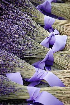 Lavender .