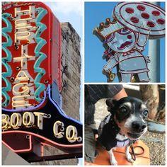 Dog-Friendly Austin