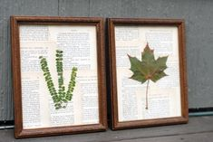 DIY Framed Botanical Wallpaper Easy way to make your walls pop using just empty frames, plastic flowers, and tape Botanical Wallpaper, Botanical Prints, Better Homes And Gardens, Big Leaf Plants, Pressed Leaves, Leaf Art, Diy Frame, Do It Yourself Projects, Diy Art