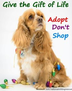 Give the gift of life. Adopt don't shop!
