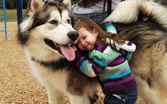 15 photos qui montrent la loyauté infinie des chiens