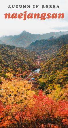If you plan on autumn travel in Korea, visiting Naejangsan (or Mt. Naejang) should be at the top of your things to do list! This gorgeous mountain is THE place to see fall foliage at its best. #autumninkorea #thingstodoinkorea #naejangsan