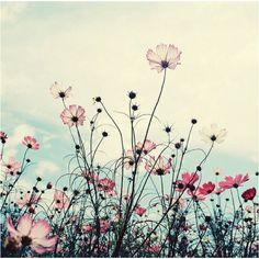 flowers, translucent under the sky