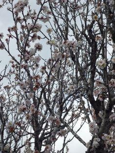 Sakura by Renie A. Priyanto Flowers Flower Gardens ( japanese garden japan s … - Modern Garden Types, Osaka Japan, Japan Art, Japanese Garden Landscape, Japanese Gardens, Japan Sakura, Japan Illustration, Japan Garden, Japan Architecture