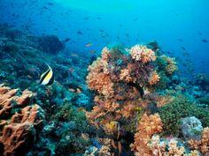 Laut Banda - Indonesia
