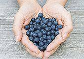 Blueberries Reduce Insulin Resistance & Fat Cell Inflammation #blueberries