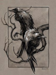 Huginn & Muninn from the Poetic Edda (Norse Mythology) by Daniel Govar  Artist Website : http://danielgovar.com/