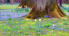 Blütenwiese mit Narzissen - Jahreszeiten - Galerie - Community
