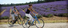 Von Mitte Juni bis Anfang August blühen die Lavendelfelder in der Provence in Südfrankreich. Für tolle Reiseangebote nach eurem Geschmack besucht travelyst.de!